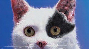 Identification des chiens et des chats : une obligation règlementaire